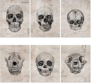 Skull Wall Decor Poster Set - 6 Pack, 8x10 UNFRAMED - Gothic Decor for Bedroom - Goth Wall Decor - Skull Bathroom Decor - Skeleton Poster - Skull Art Wall - Halloween Poster - No Gothic Accessory design.
