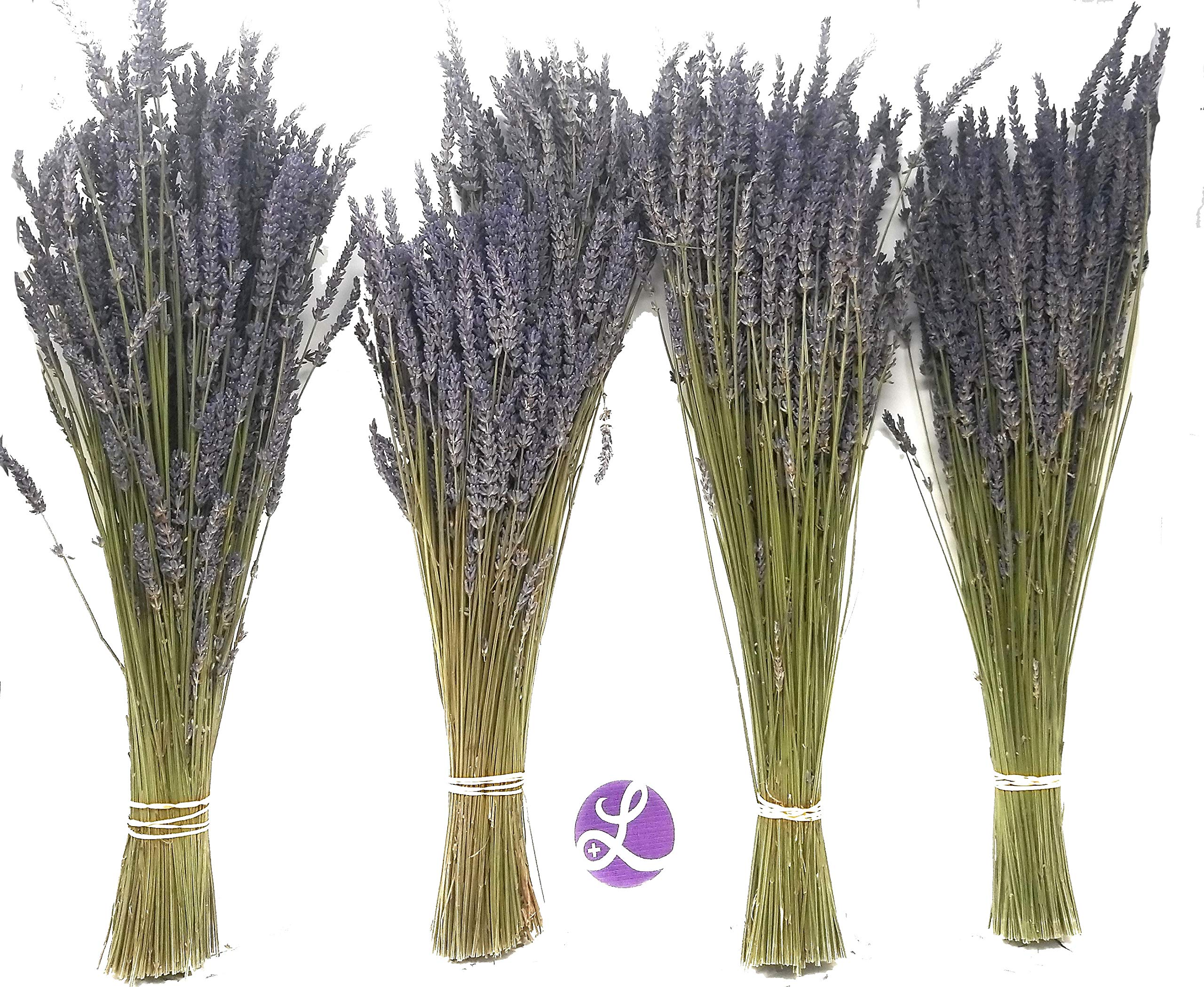 Findlavender - Lavender Dried Premium Bundles - 18'' to 22'' - 130 to 150 Stems - Can Be Used for Any Ocassion - Perfect for Your Wedding - 4 Bundles by Findlavender