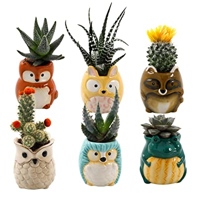 Animal Ceramic Succulent Planters Set of 6 | 2.5 Inch Small Cactus Pots with Drainage Hole Cute Gift Raccoon Owl Rabbit Hedgehog Frog Fox (Small Set of 6 Backyard Animals): Garden & Outdoor