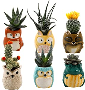 Matty's Garden Animal Ceramic Succulent Planters Set of 6 | 2.5 Inch Small Cactus Pots with Drainage Hole Raccoon Owl Rabbit Hedgehog Frog Fox (Small Set of 6 Backyard Animals)