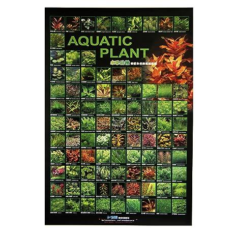 Azoo Póster de la Planta de decoración de Acuario I: Amazon ...