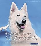 Weiße Schweizer Schäferhunde: Aktiv, sportlich, anhänglich (Hunderassen)