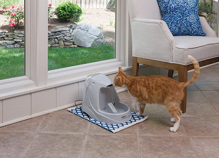 Best Cat Water Fountain Reviews