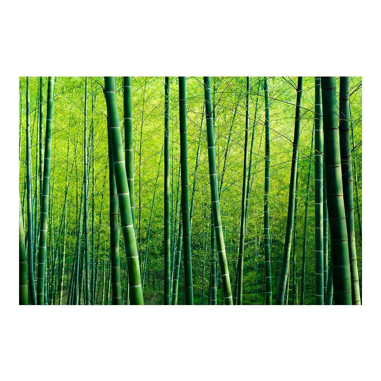 Vliestapete – Bambus Wald – Wandbild breit
