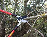 TABOR TOOLS GG12 Anvil Lopper with Compound Action, Chops Thick Branches with Ease, Tree Trimmer, Branch Cuttter with 2 Inch Clean Cut Capacity, 30