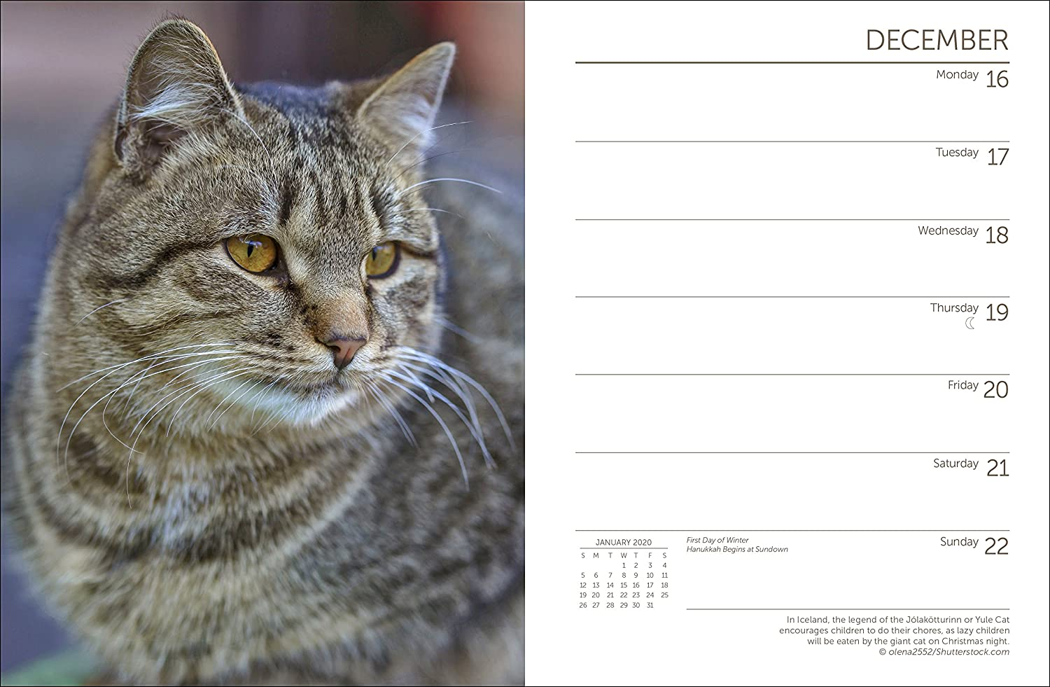 Amazon.com : Cats Engagement Calendar 2019 : Office Products
