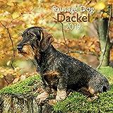 Dackel 2019 - Broschürenkalender, Wandkalender, Tierkalender - 30 x 30