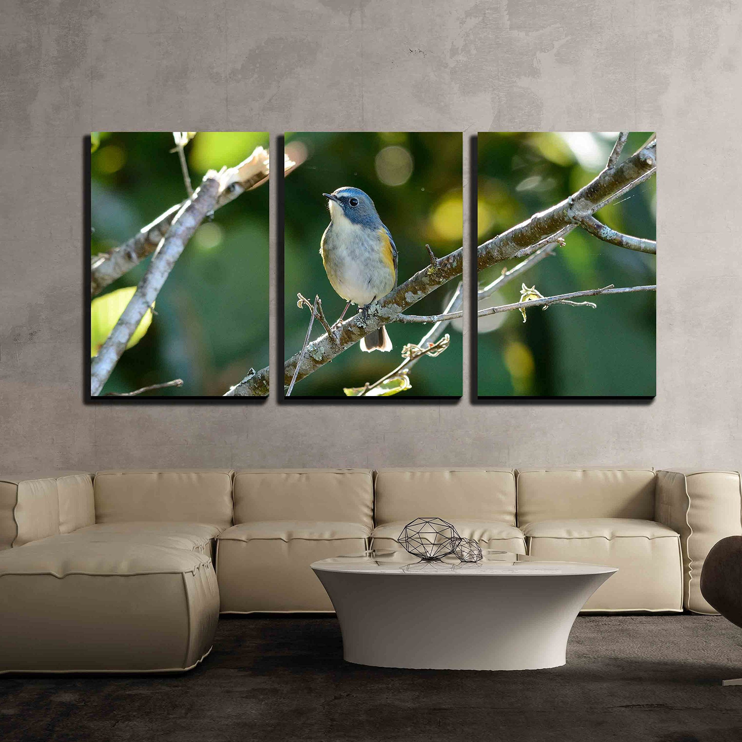 wall26 - 3 Piece Canvas Wall Art - beautiful male Red-flanked Bluetail Tarsiger cyanurus in Thai forest - Modern Home Decor Stretched and Framed Ready to Hang - 24''x36''x3 Panels by wall26