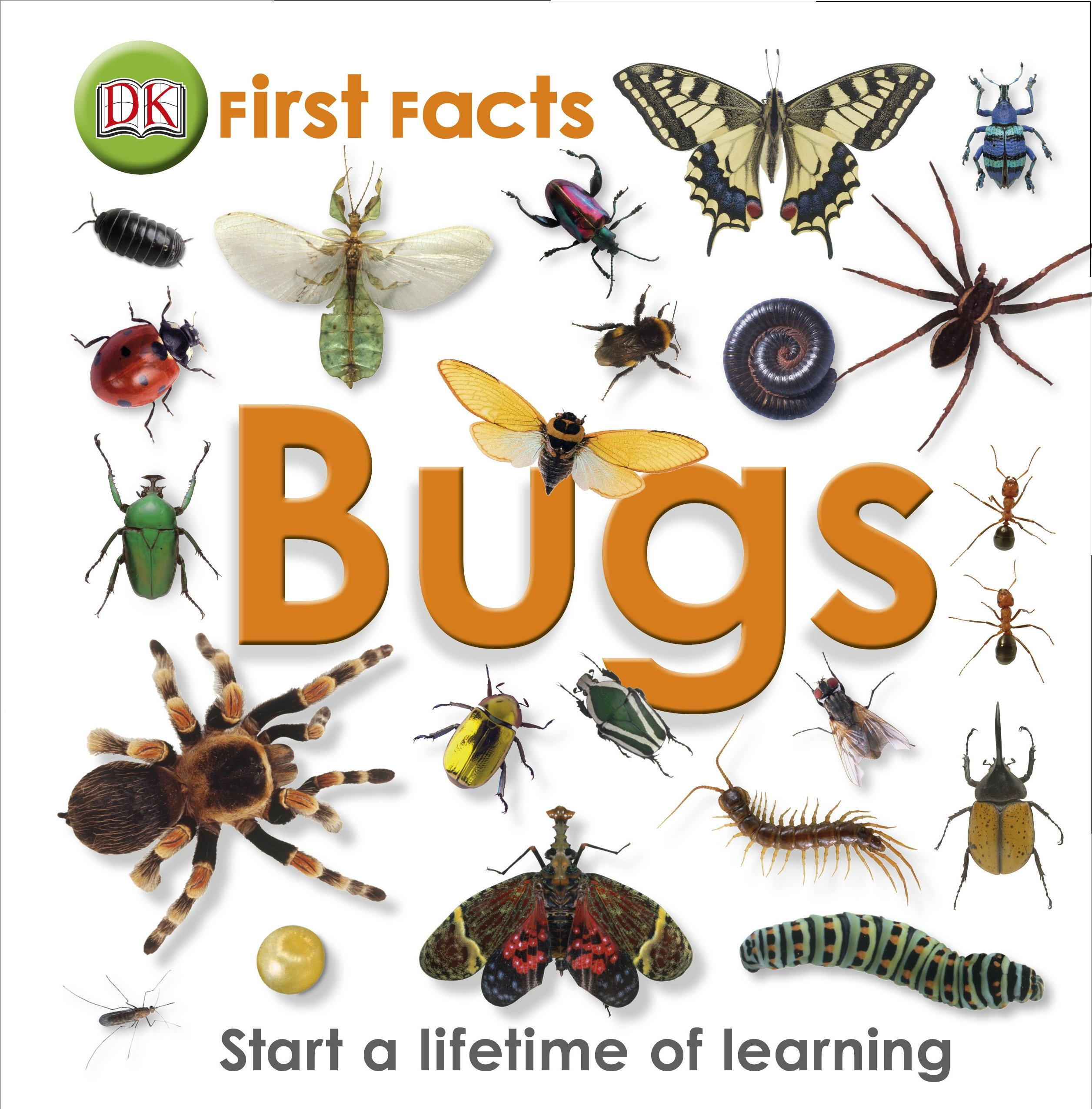 bugs first facts dk 9781405368131 amazon com books
