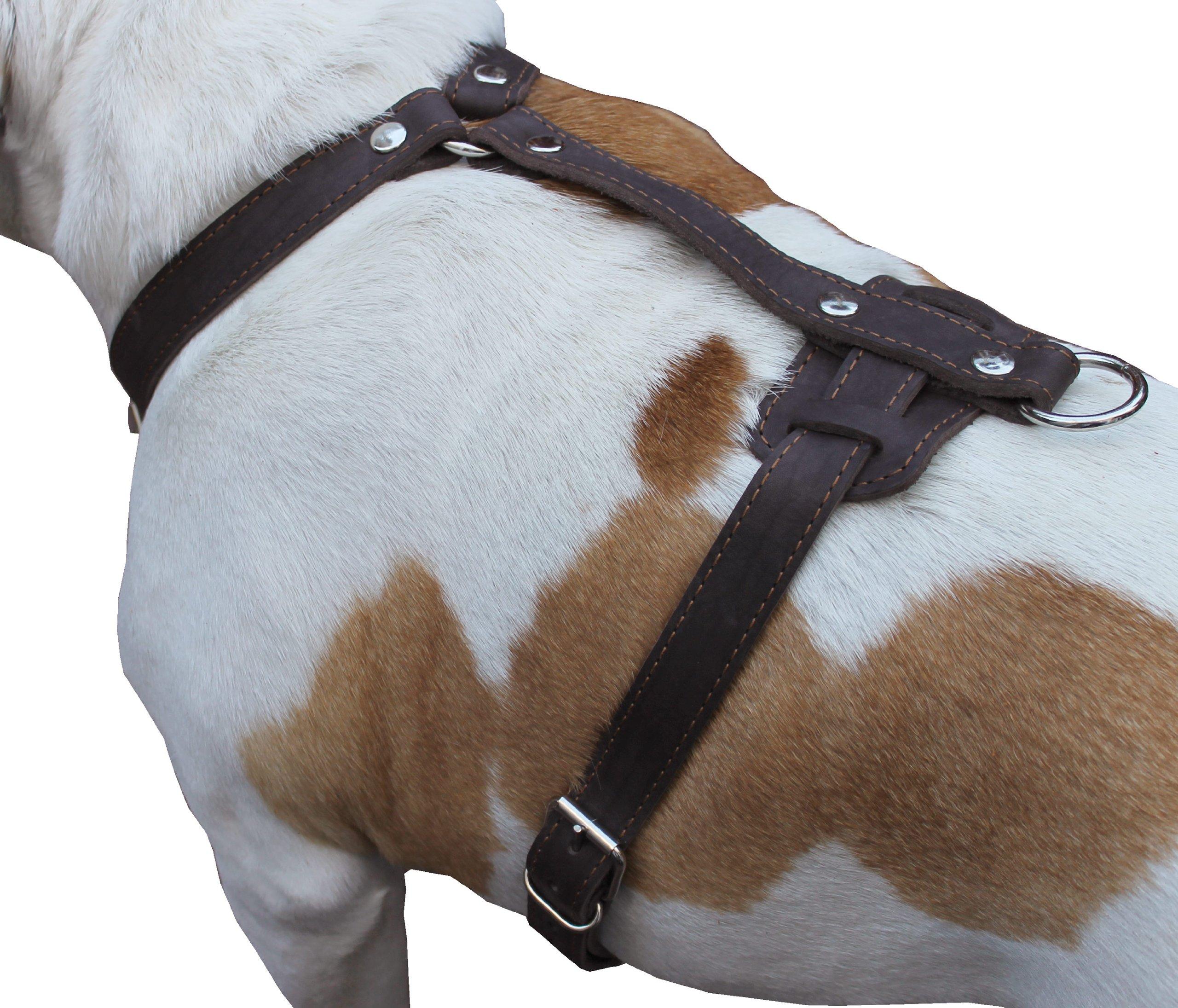 Genuine Leather Dog Harness, 37''-45'' Chest, 1'' Wide Straps. XXLarge. Newfoundland, Mastiff