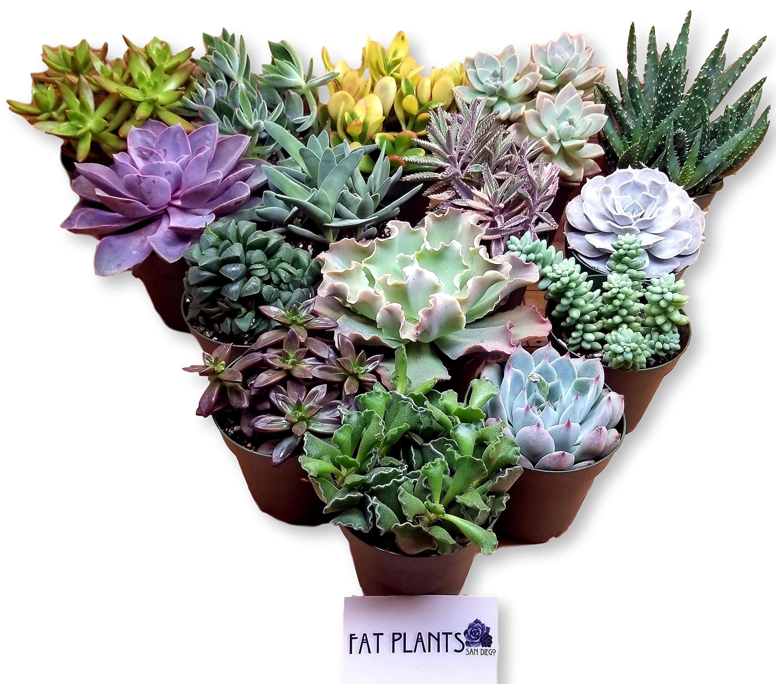 Fat Plants San Diego Large Succulent Plant Collection