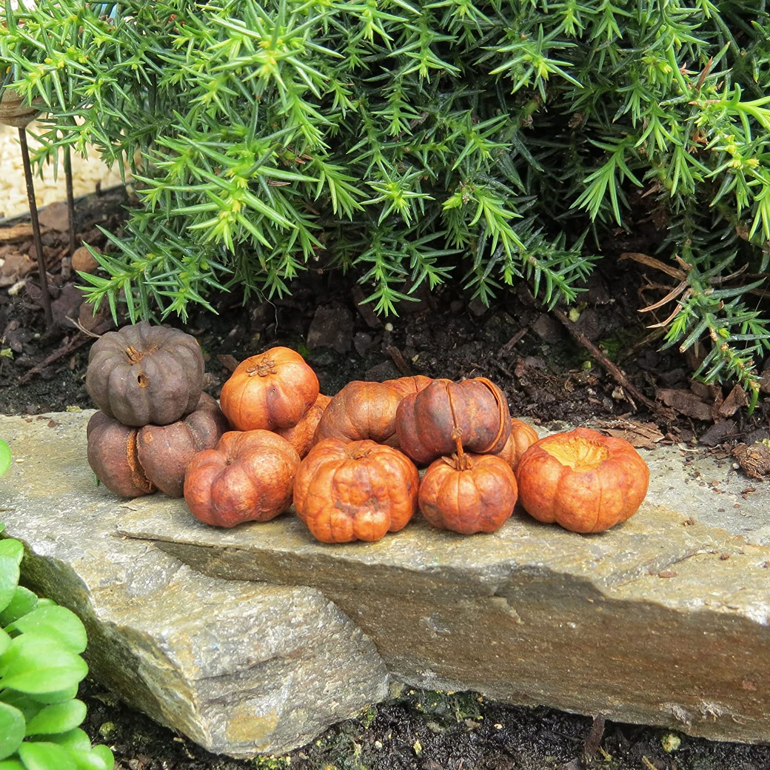 amazon com miniature fairy garden putka pumpkins 25 pieces