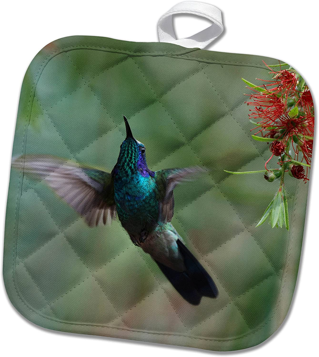 3drose Pot Holder Green Violetear Hummingbird Colibri Thalassinus Costa Rica 8 By 8 Kitchen Dining