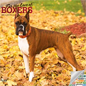 for The Love of Boxers Calendar 2021 Bundle - Deluxe 2021 Boxers Wall Calendar with Over 100 Calendar Stickers (Dog Lover Gifts, Office Supplies)