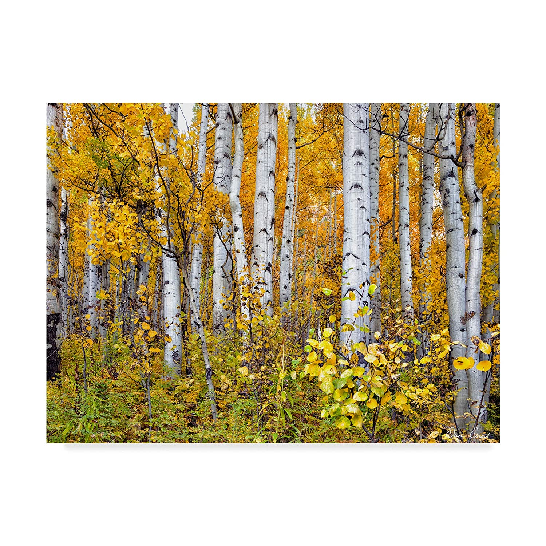Trademark Fine Art Yellow Woods IV by David Drost, 14x19