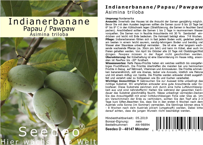 Indianerbanane 50-70cm Versandkosten 22 Vielfalt Asimina triloba gepfropft frosthart 25/°C
