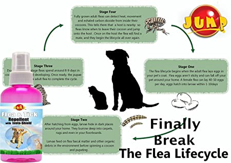 Amazon Jump Flea And Tick Prevention For Dogs Cats 100 All Natural Ingredients No Pestisides Eliminate Fleas Use As A Shampoo Collar Powder