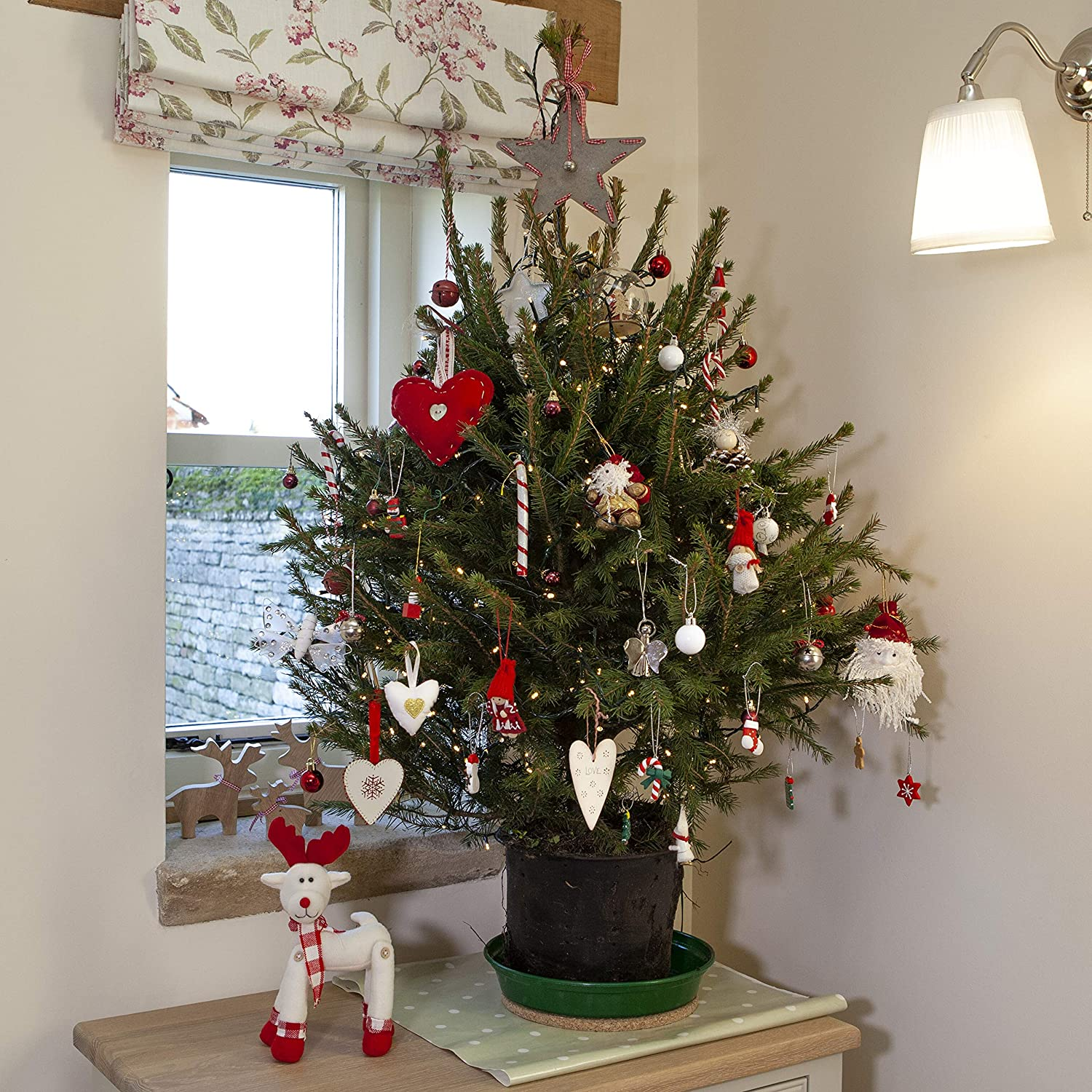 Living Christmas Tree.Yougarden Pot Grown Norway Spruce Living Christmas Tree