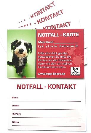 Dogs-Heart Notfallkarte Hund allein zu Hause - Bei Unfall oder ...