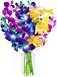 KaBloom Exotic Rainbow Orchid Bouquet of 5 Blue Dendrobium Orchids, 3 Purple Dendrobium Orchids, and 2 Yellow Dendrobium Orchids from Thailand with Vase