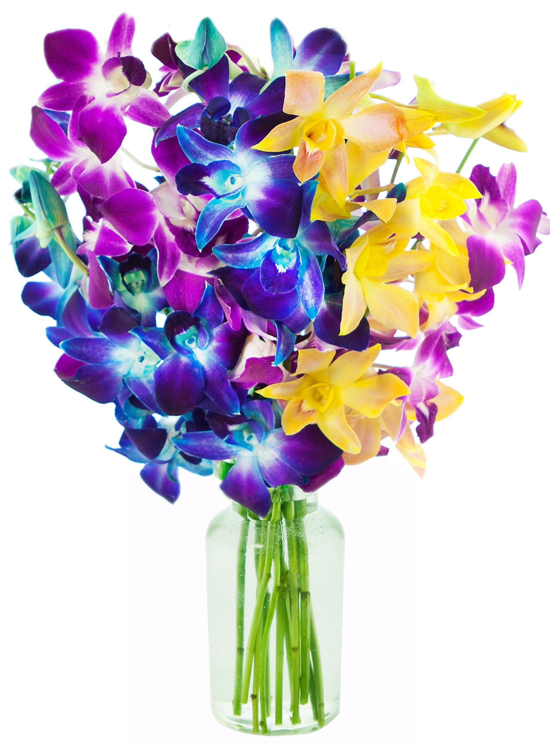Exotic Rainbow Orchid Bouquet of 5 Blue Dendrobium Orchids, 3 Purple Dendrobium Orchids, and 2 Yellow Dendrobium Orchids from Thailand with Free Vase Included by KaBloom