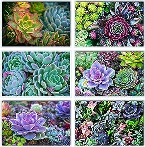 L & O Goods Succulent Wall Decor | Boho Minimalist Bathroom Kitchen Living Room Office Botanical Plant Wall Art Photo Prints | Set of Six 8x10 Inch Artwork (Unframed)