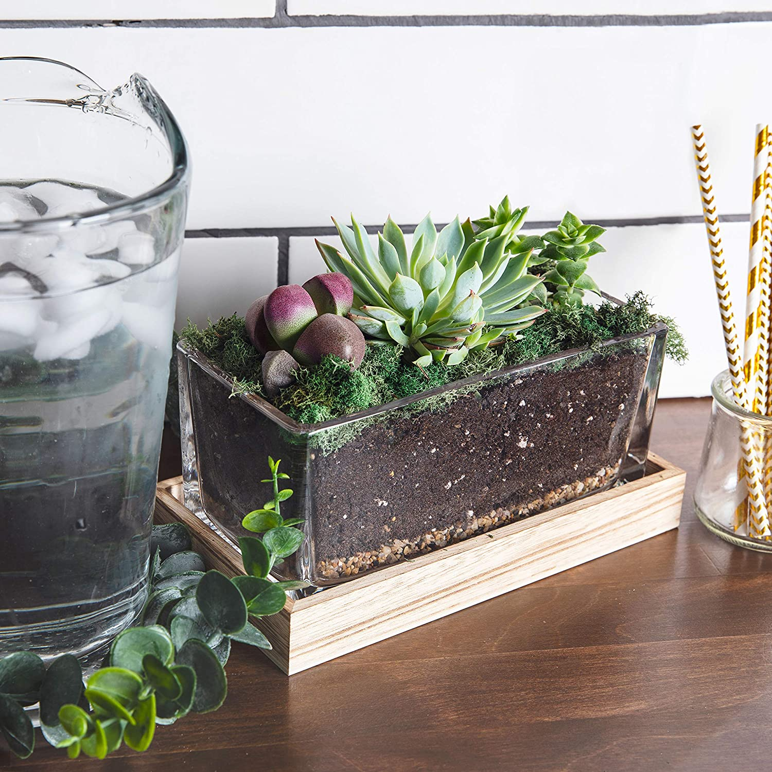 IvyKeith Leakproof Terrarium Farmhouse Wooden and Glass Easy to Plant Container Decor Flower Pot Planter DIY Display Box for Succulent Fern Moss Air Plants Miniature Fairy Garden Gift No Plants