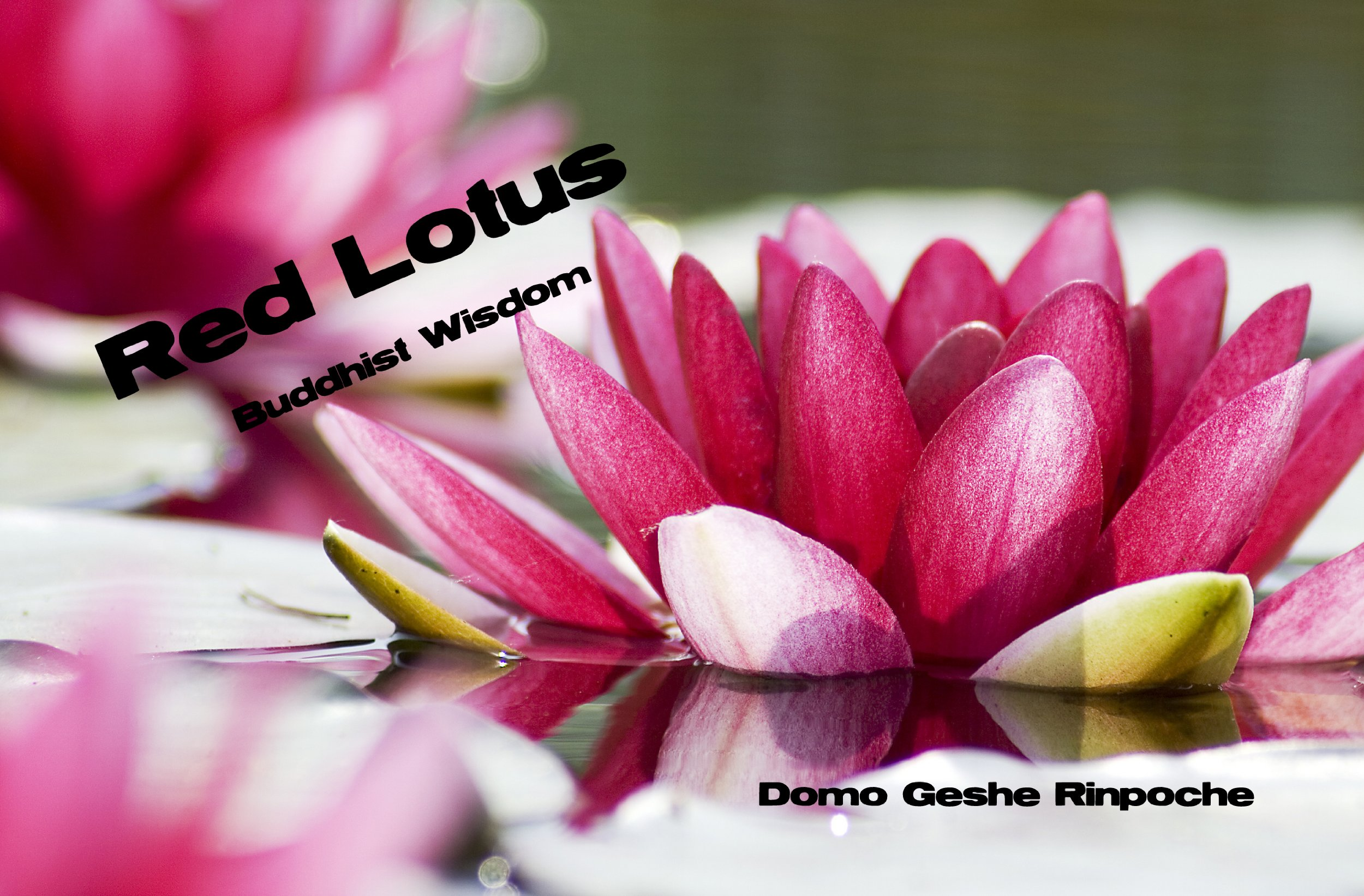 Red Lotus Buddhist Wisdom pdf epub