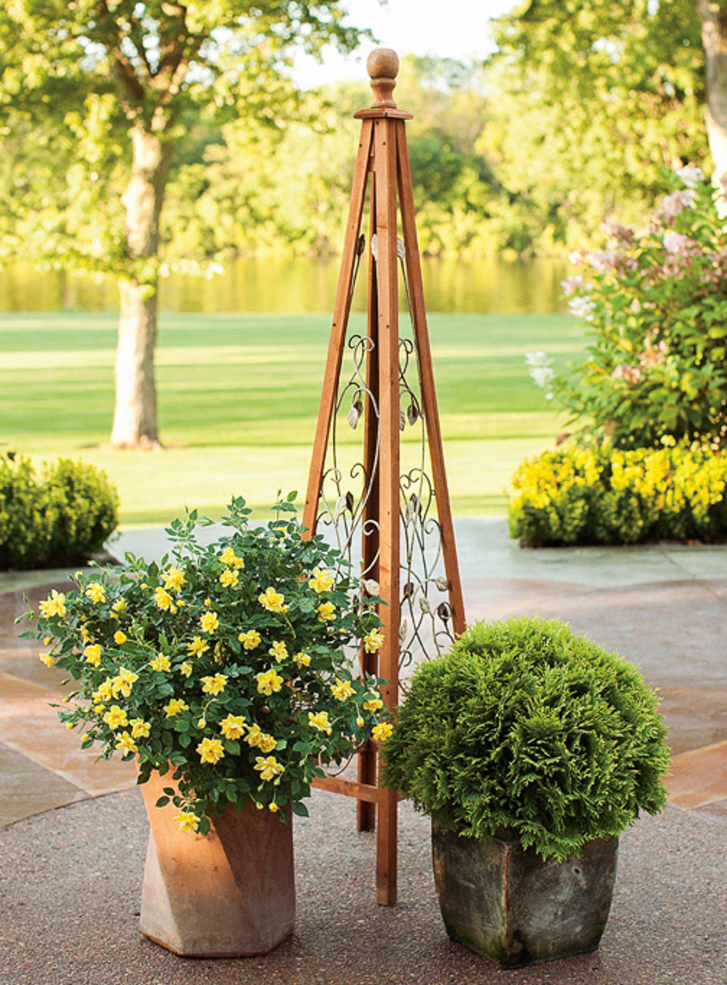 3 Gal. Oso Easy Lemon Zest Landscape Rose (Rosa) Live Shrub, Yellow Flowers by Proven Winners (Image #7)