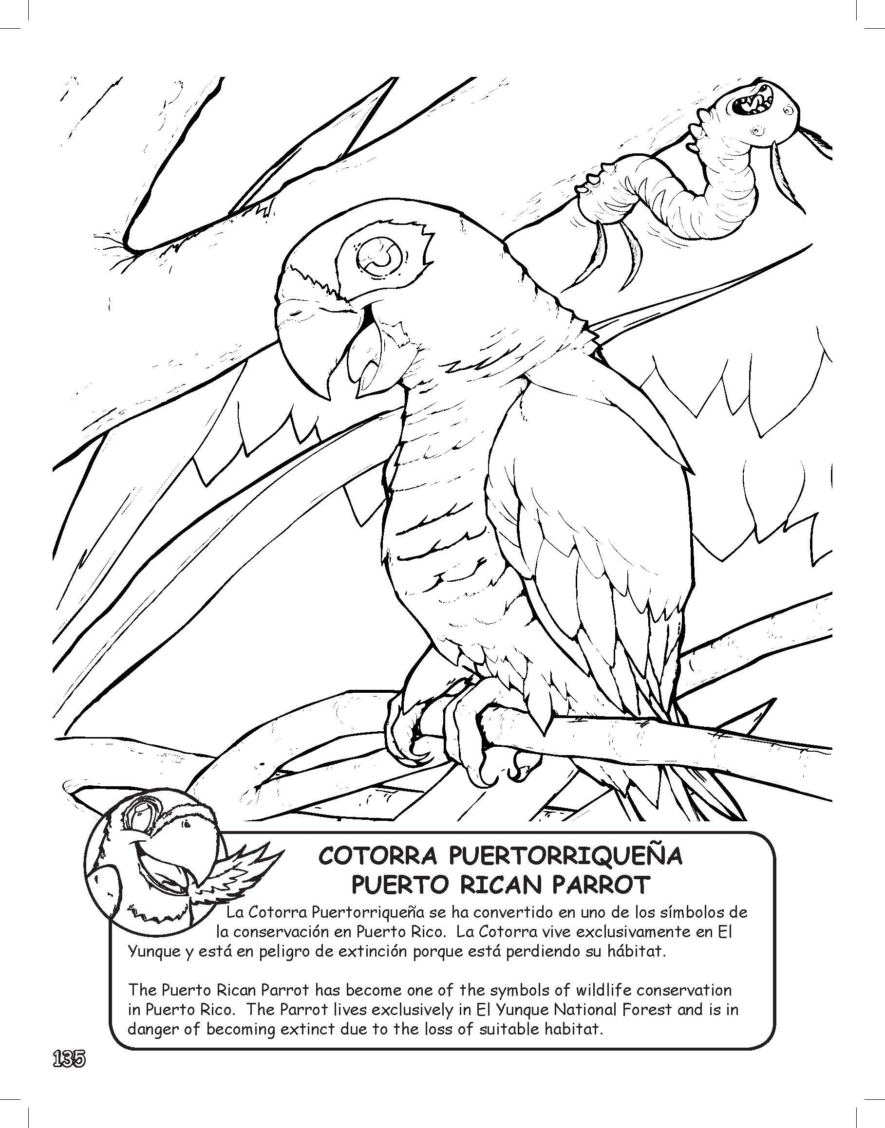 Puerto rico coloring learning activity book 303 pages with 4 pages puerto rico coloring learning activity book 303 pages with 4 pages of colorful stickers english and spanish edition amazon mark drenth biocorpaavc Choice Image