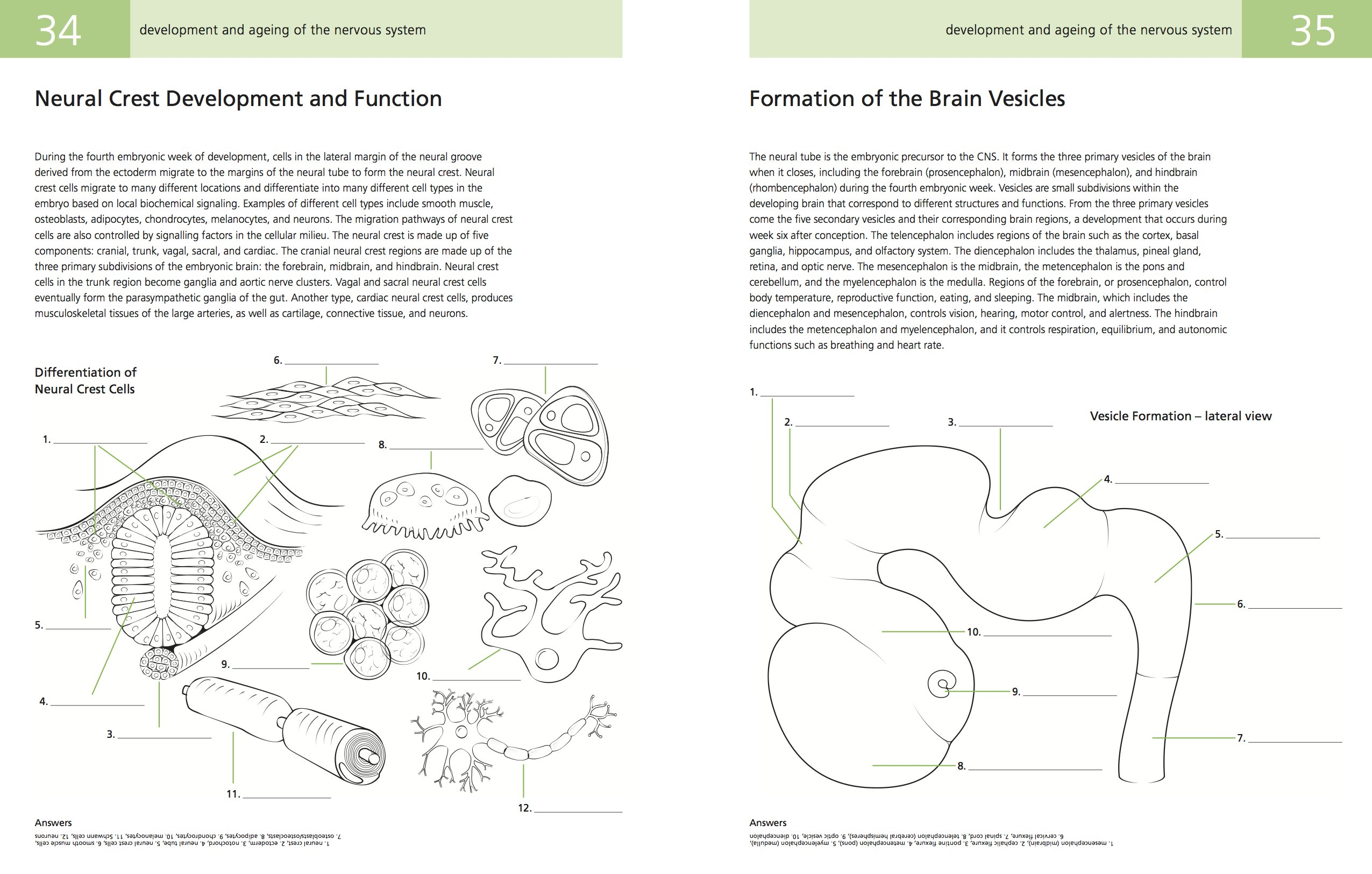 The human brain coloring book diamond - The Brain A Student S Self Test Colouring Book Amazon Co Uk Joshua Gowin Wade Kothmann 9780857624635 Books