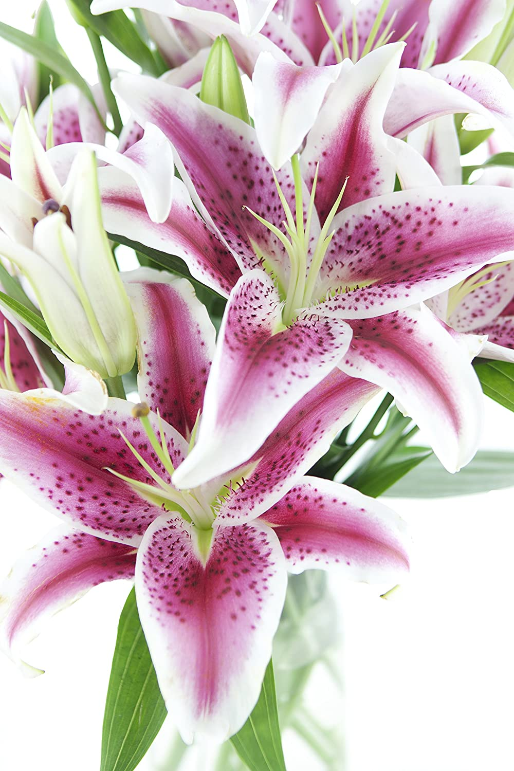 Amazon pink stargazer lily bouquet 13 stems the kabloom amazon pink stargazer lily bouquet 13 stems the kabloom collection flowers with vase grocery gourmet food izmirmasajfo