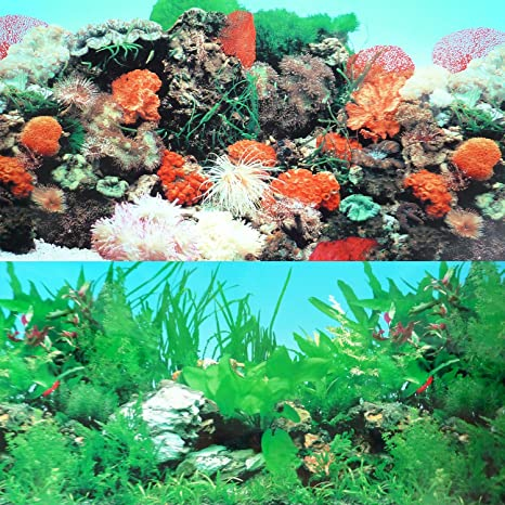 "9090 20 ""x 48"" pecera, doble cara Fondo Tropical/Reef"