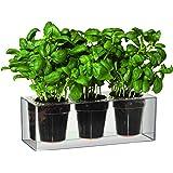 Boskke Clear Cube Tabletop Planter - Triple