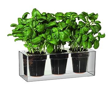 Boskke Clear Cube Tabletop Planter   Triple