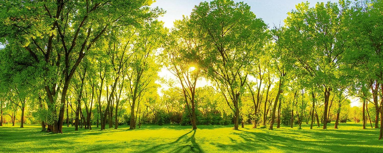 Artland Qualitätsbilder I Glasbilder Deko Glas Bilder 125 x 50 cm Landschaften Wiesen Bäume Foto Grün D8RW Frühlingswärme II