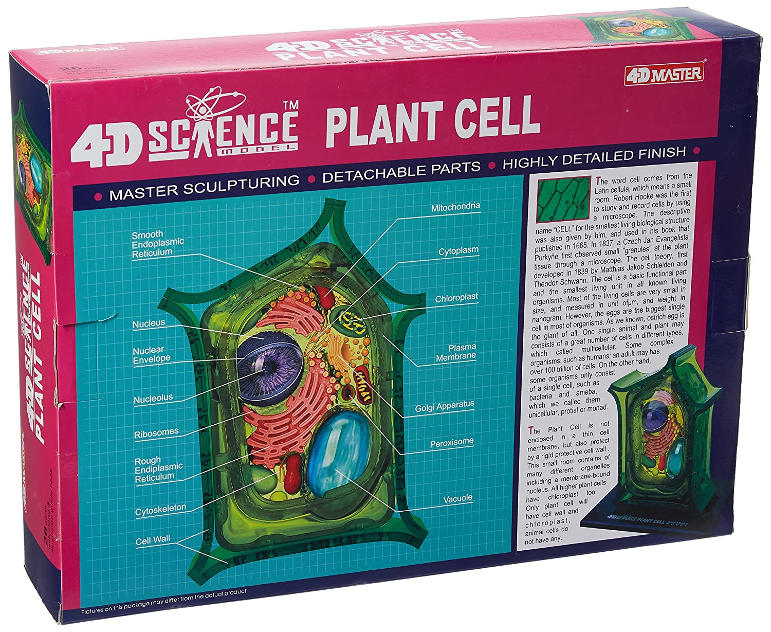 Famemaster 4d Science Plant Cell Anatomy Model Toys Games Diagram Labeled 3d Wallcell