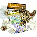 Fossil Collection Sorting Activity Kit with over 100 Pcs (more than 20 different fossil varieties!) Educational ID Sheet Color ID Cards Bags Magnifying Glass and Shark Teeth Dancing Bear Brand