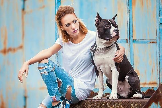 Articulación aguda especialmente para perros - con MSM + Chon droitin Glucosamina Collagen bandas tendones perro (400g): Amazon.es: Productos para mascotas