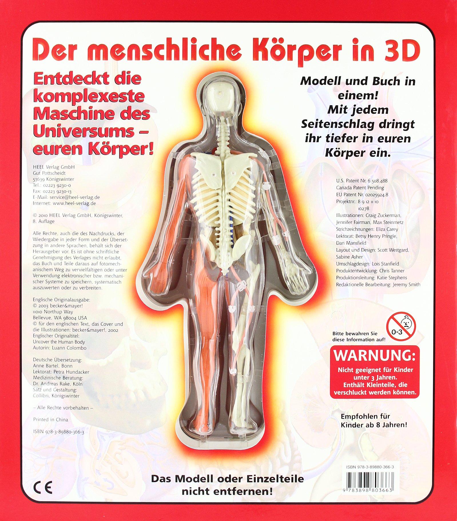 Der menschliche Körper in 3D - Buch mit Skelettmodell: Amazon.de ...