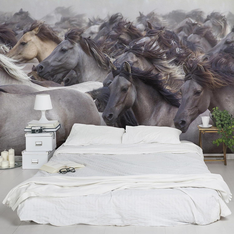 Fototapete Wildpferd   Tapete Vliestapete