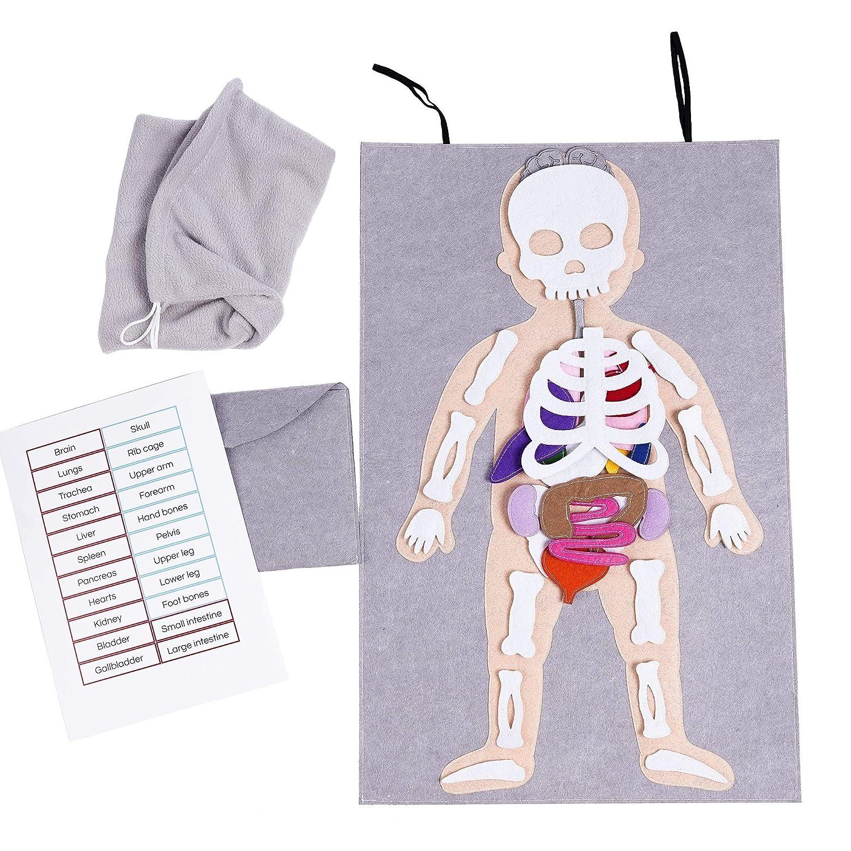 Human Anatomy Felt board, Human Anatomy Toy, Doctor Pretend Play Set, Felt Skeleton Toy
