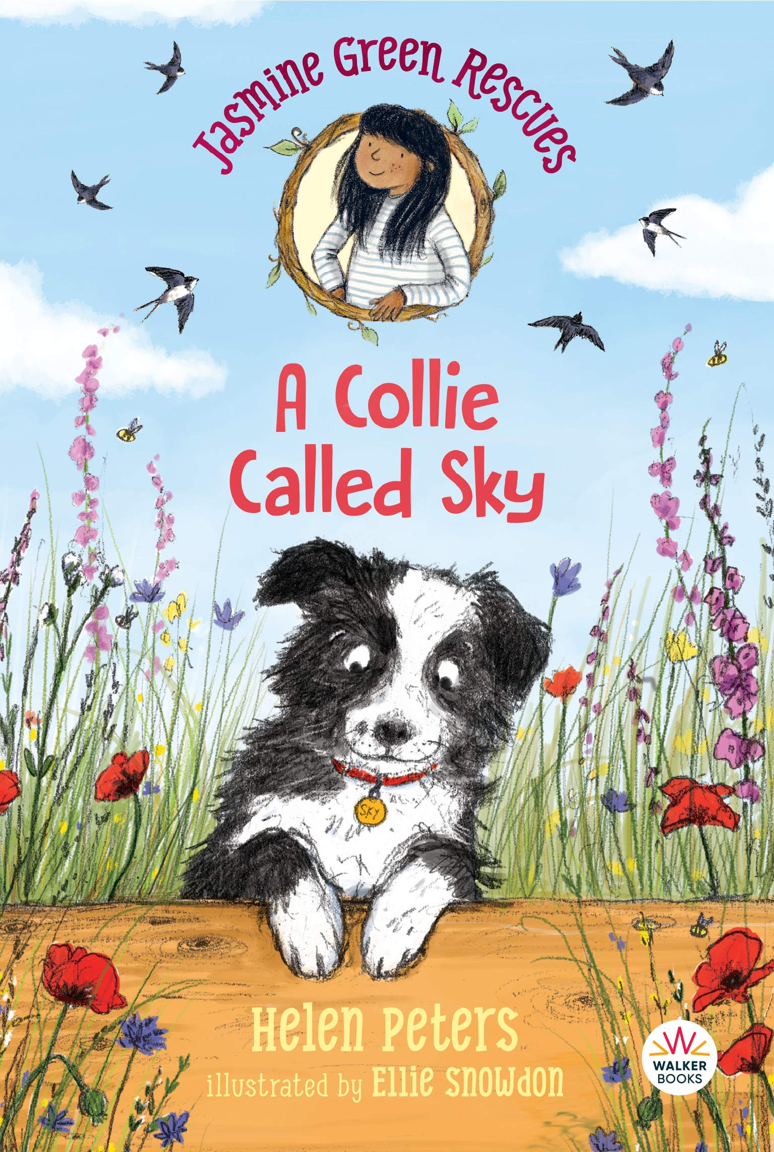 Jasmine Green Rescues: A Collie Called Sky: Peters, Helen, Snowdon, Ellie:  9781536215717: Amazon.com: Books