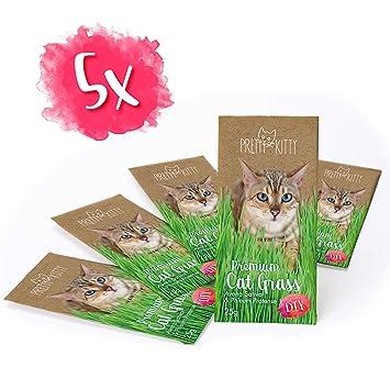 CAT GRASS SEEDS 50+