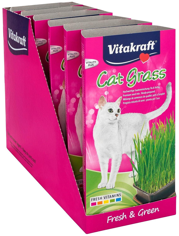 VITAKRAFT 1571260031 - hierba para gato: Amazon.es: Productos para mascotas