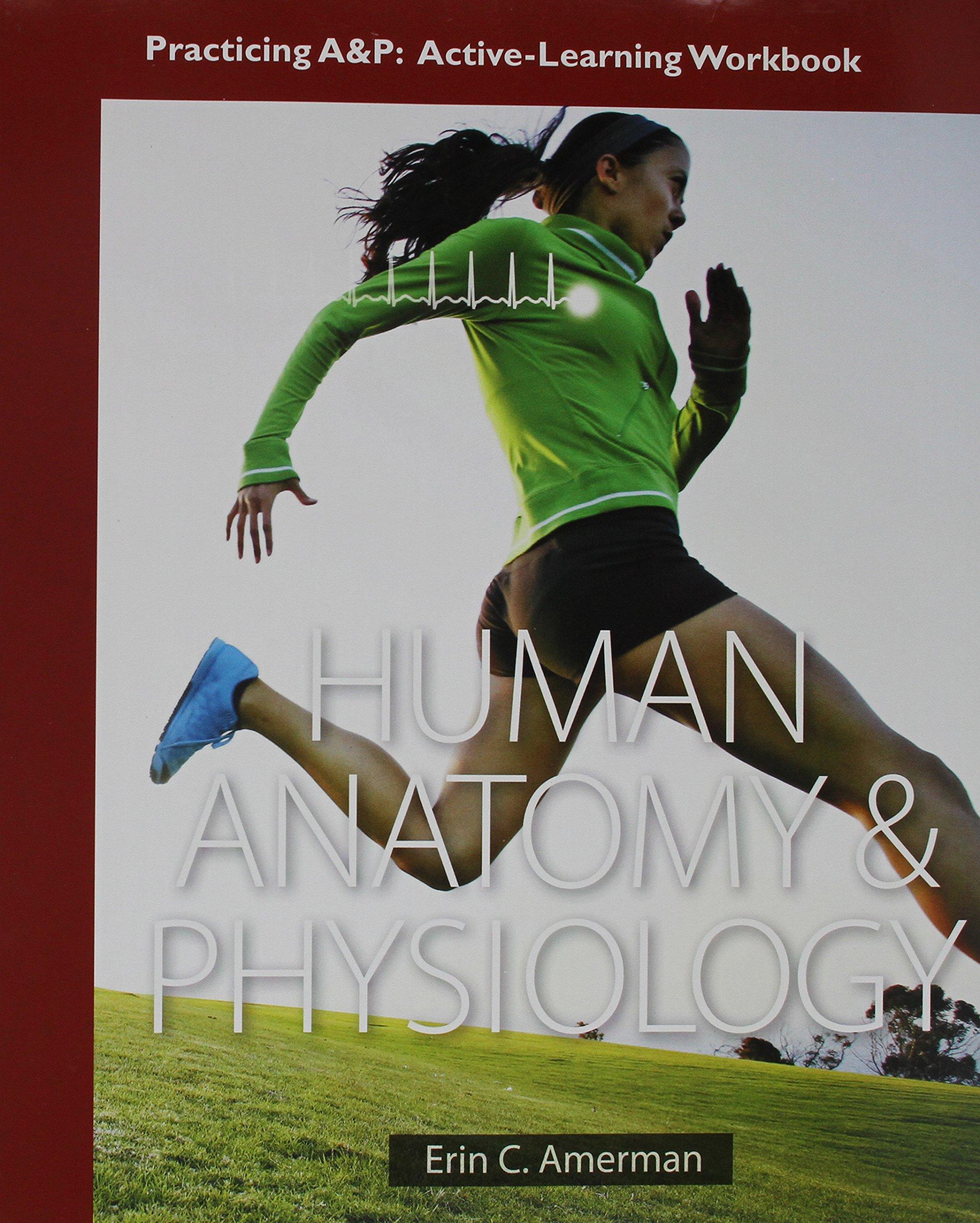 Ausgezeichnet Human Anatomy And Physiology First Edition By Erin C ...