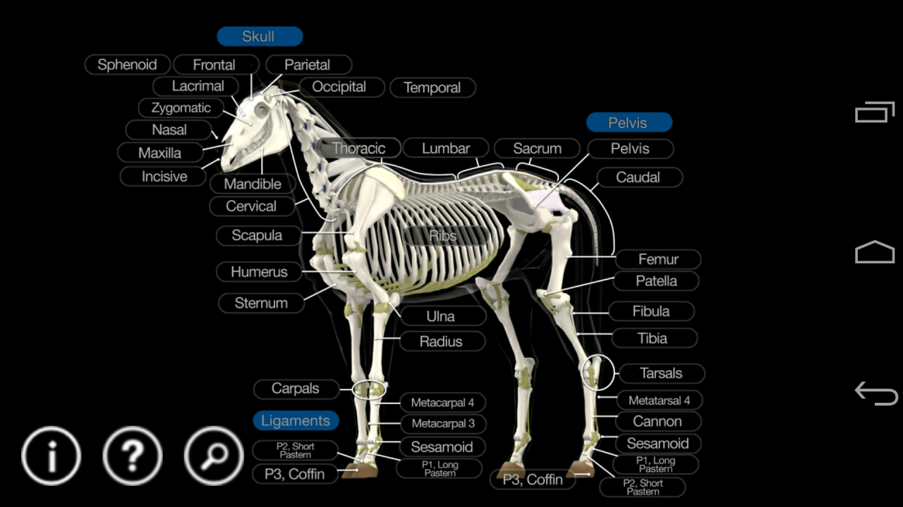 Amazon.com: Horse Anatomy: Equine 3D: Appstore for Android