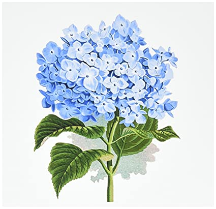 Amazon Com 3drose Blue Hydrangea Flowers Vintage Art Floral