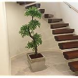 Lusso Artificiale Giapponese Fruticosa Albero , Grande Elegante Replica / Falso Indoor Plant - 5ft 4 pollici / 165 centimetri alto . Perfetto per la casa o l'ufficio