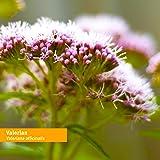 Herb Pharm Certified Organic Valerian Root Liquid